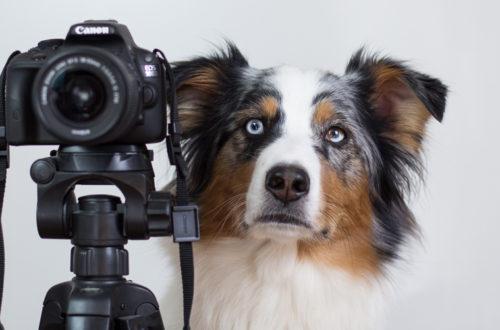 Einsteiger Spiegelreflexkamera und Kit Objektiv