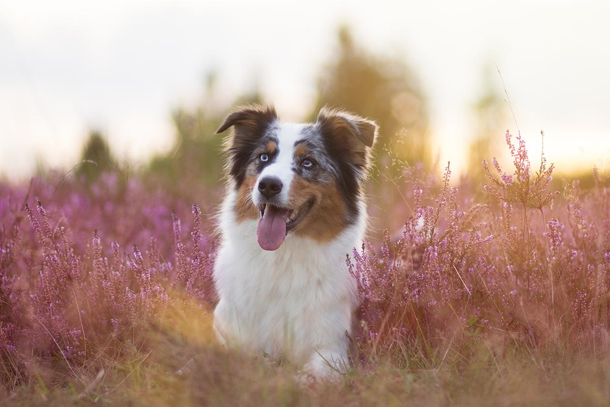13 Tipps für schönere Hundefotos